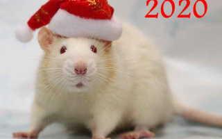Как привлечь удачу в новом 2020 году: выбираем талисманы в год Белой Крысы