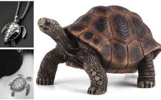 Талисман Черепаха: значение символа, все особенности выбора талисмана