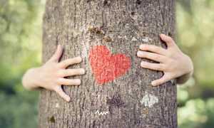 Магическая сила деревьев