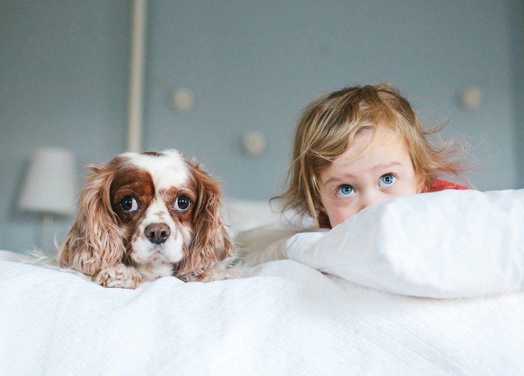 Собаки и дети видят ангелов