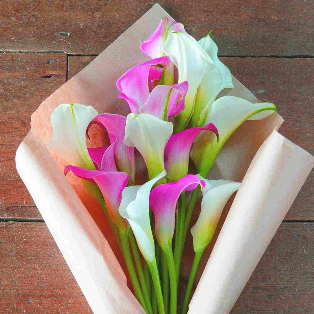 Каллы считают «денежными» цветами, их дарят, когда хотят пожелать новобрачным финансового благополучия