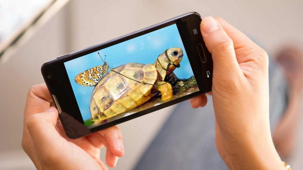 заставка на телефон черепаха значение