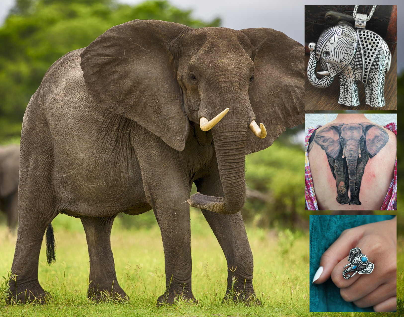 Слон талисман значение