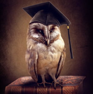 талисман сова для учебы